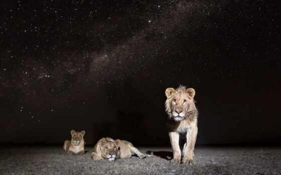 фотоаппарат, животные, ночь, trail, vision, hunt, game, scoutguard, монитор, amazon