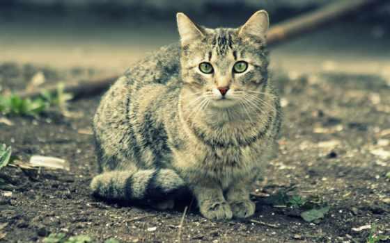 кошка, позерша
