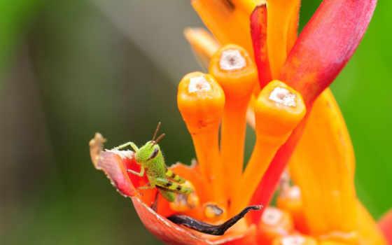 различных, видов, насекомые, обоях, часть, кузнечик,