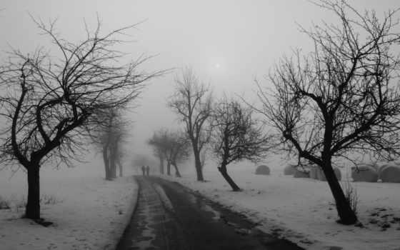 деревья, дорога Фон № 31957 разрешение 1920x1080