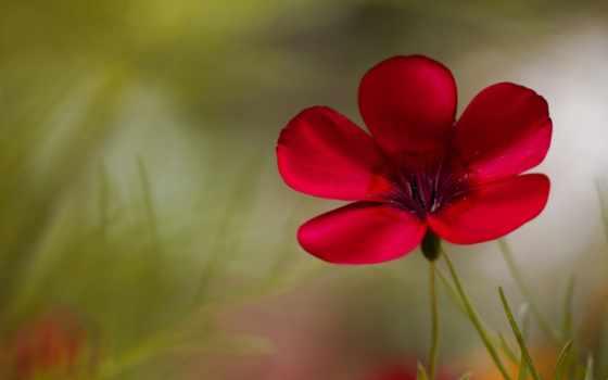 цветы, flowers, цветочек
