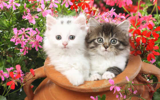 cute, cats, kittens