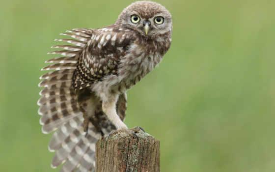 сова, крыло, птица, сидя, stump, перья, тянется,