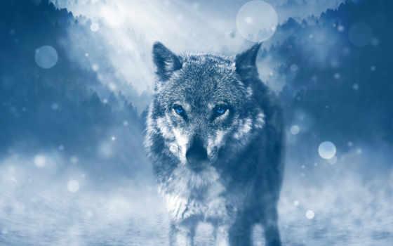 волк, desktop, ultra