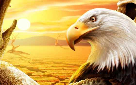 орлан, яndex, zhivotnye, придумывают, stock, пустыня, люди, коллекциях,