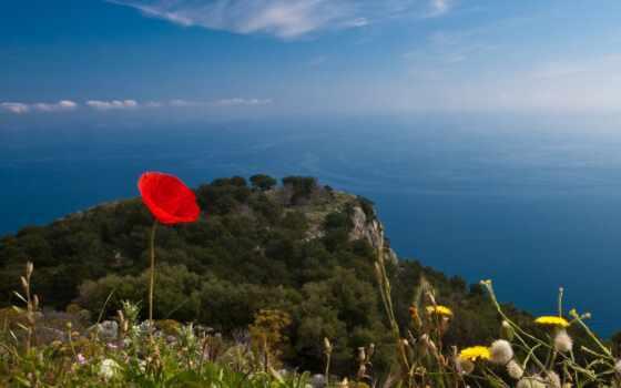 цветы, гора, море, optics, небо, салон, red, взгляд, top