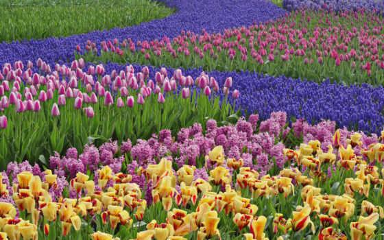 обоев, цветы