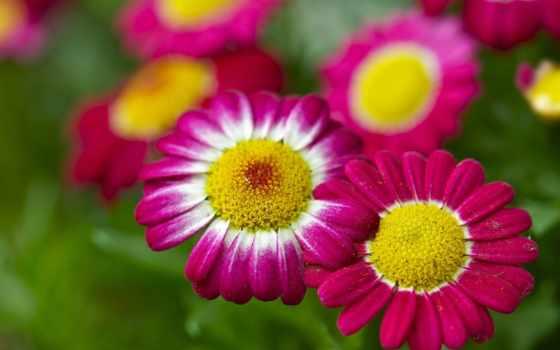 Цветы 20033