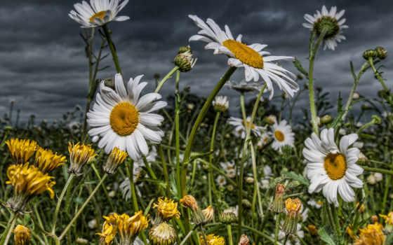 цветы, поле Фон № 26450 разрешение 1920x1200