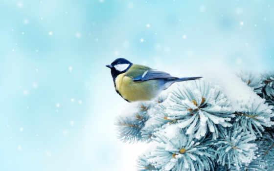 winter, птицы, снегири
