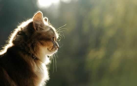 kot, svet, красивый, шерсть, траве, усы, ошейник, свой, wpapers, котов, совершенно,