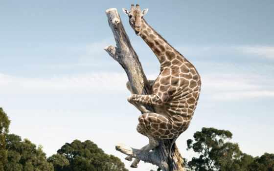жираф, дек, креативные, animal, большие, fear, дереве, красивые, фракталы, трубки, цветные,