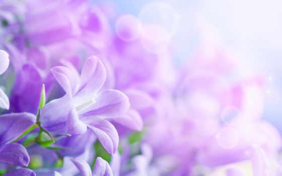 cvety, листки, красивые, лепестки, march, живые, нежные,