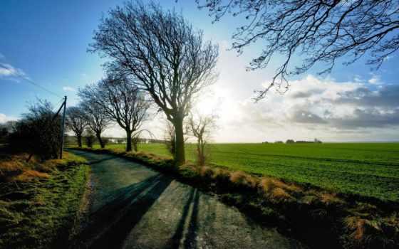 ecran, fonds, поле, дерево, небо, sun, зелёный, трава, ветки,