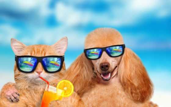 очки, собака, море, кот, кота, собаки, солнечные, нося, relaxing, очках,