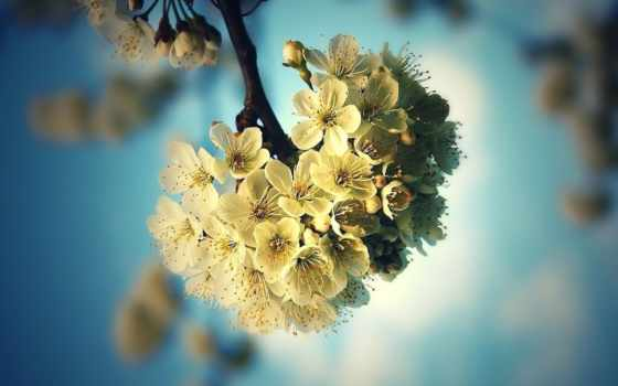 flowers, depth, поле, природа, norma, plants, desktop,