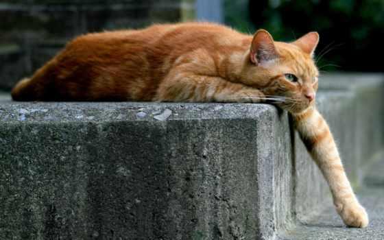 кот, red, увеличить,