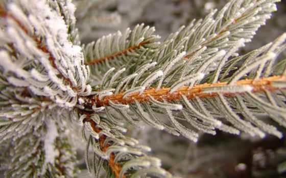 winter, снег, макро, лучшая, открытки, страница, уже,