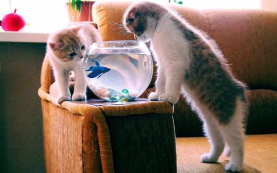 animal, котенок, кот, fish, аквариум