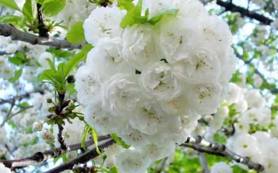 Цветы 37357
