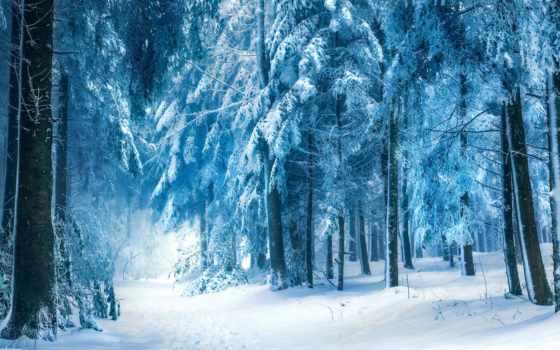 winter, лес, сказочный, favourite, лесу, зимнем, разных, разрешениях, природа,