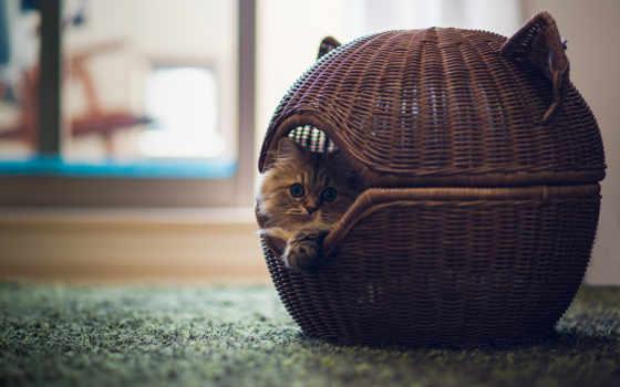 кошки, кошек, lodge, house, кошкин, купить, лежаки, своими, руками, club, домики,