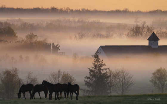 morning, horses