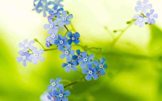 природа, цветы, flowers