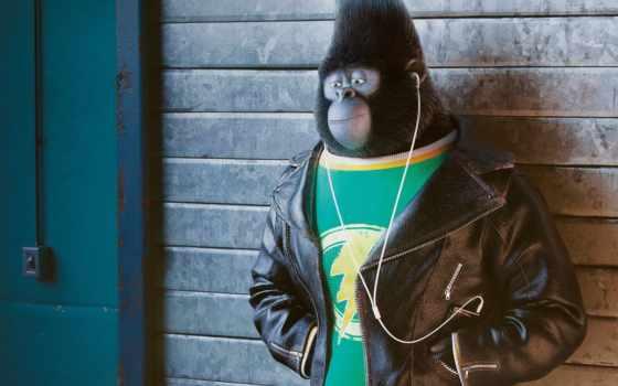 sing, джонни, горилла