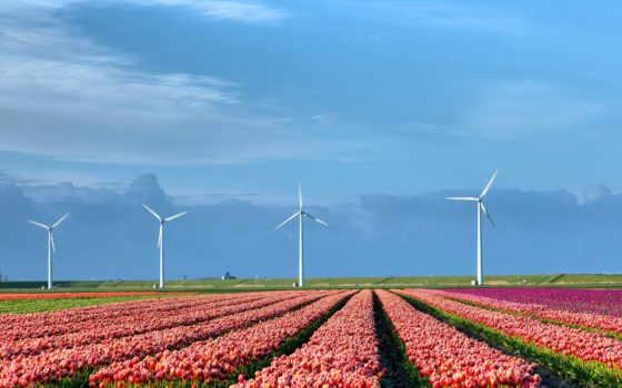 природа, поле, высоком, тюльпаны, mill, тюльпанов, holland, oblaka,