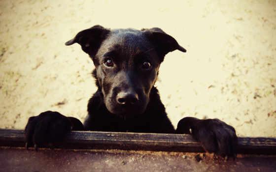 wallpaper, пес, собака, нос, песок,
