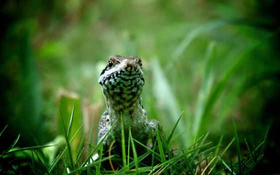 траве, ящерица