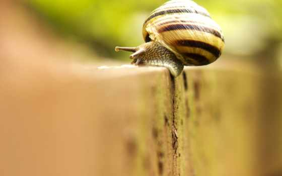 nature, snail, macro, background, download,