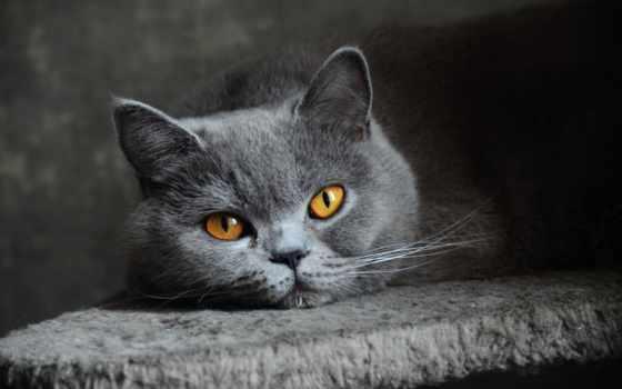 котята, заставки