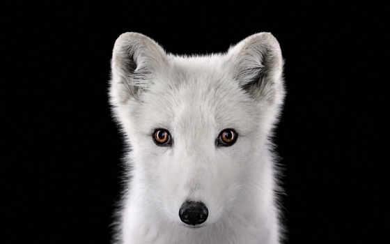 животных, диких, wilson, posters, нов, бред, фотограф, брэд,