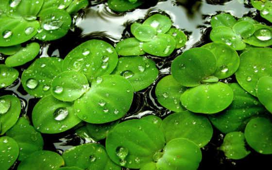 color, зелёный
