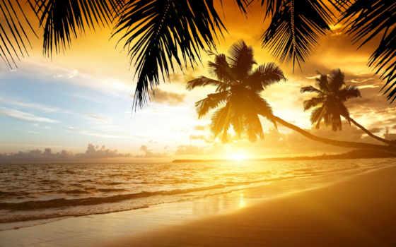 пальмы, закат, пляж, море, берег, тропики, песок,