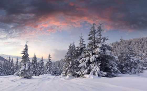 neige, ecran, fonds, arbres, hiver, les, nuages, soleil, fond, forêt, montagnes,