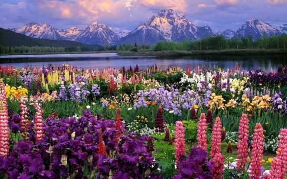 grand, пейзажи -, moran, люпины, главная, горах, teton, mount, everything, фотографий,