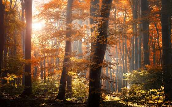 лес, осень, лесу, осеннем, утро, sun, природа, дорога, rays, весна,