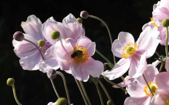 пульт, мозаики, poppy, Мозаика, цветы, flowers, матричные, creativa, бесплатные,