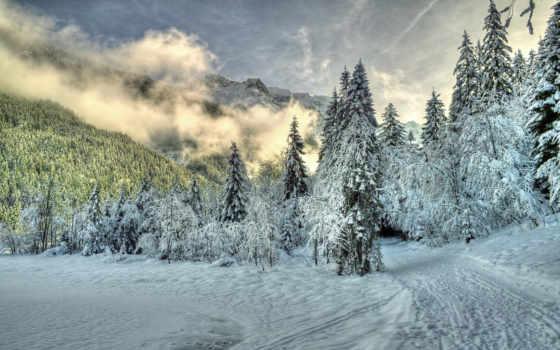winter, природа, туман, снег, лес, trees, красивые, горы, картинка, daily,