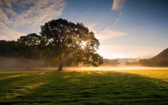 полянка, красивые, inspiration, дерево, трава, зелёная, мини, категории, лесу, postcard,