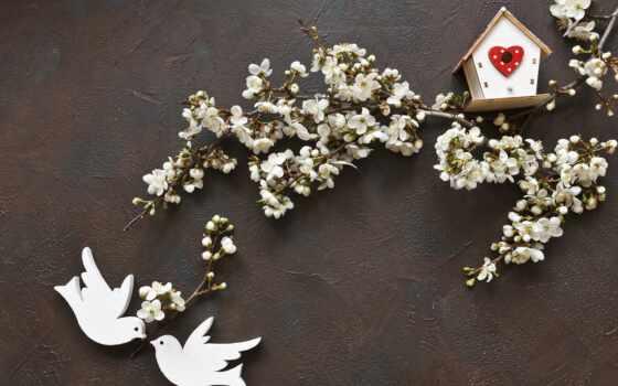 птица, фото, royalty, скворечник, card, дерево, white, цветы, два, cherry, весна