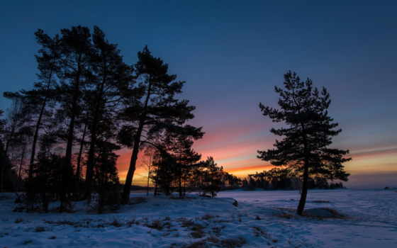 деревья, закат