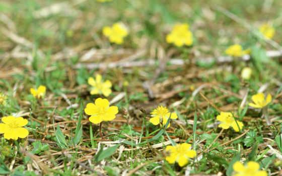 цветы, flowers, wild Фон № 78765 разрешение 1600x1200