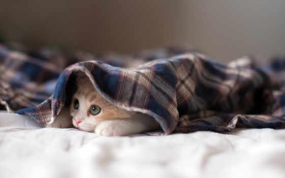 кот, sleepy, zhivotnye, share, котенок, коллекция, софт,
