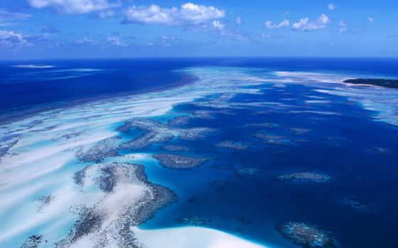 coral, риф, австралия