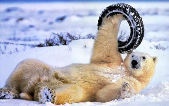 медведь, медведи, медведей, white, белых, белые, мар, самый,