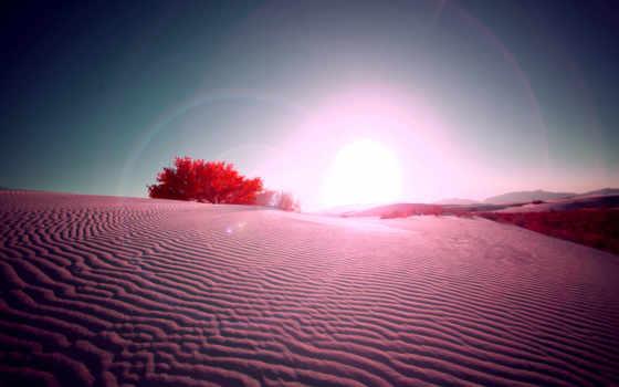 desierto, del, fondos, pantalla, árbol, сол, rosa, solitario, puesta, imágenes, naturaleza,